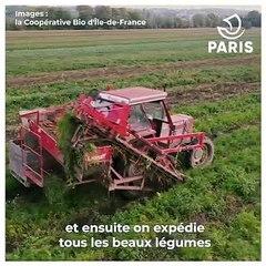 D'où viennent les carottes que mangent les enfants dans les écoles et les crèches parisiennes ?