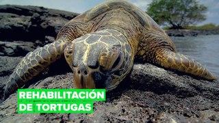 Un lujoso resort para tortugas