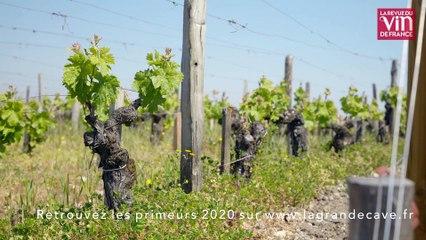 Équilibre, fraîcheur et gourmandise signent les vins de Pauillac dans le millésime 2020