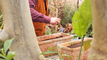Semer des salades dans une jardinière en 3 étapes simples