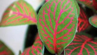 10 plantas amantes de la humedad que prosperarán en tu baño