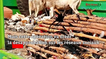 Ouagadougou : Les poulets de la discorde