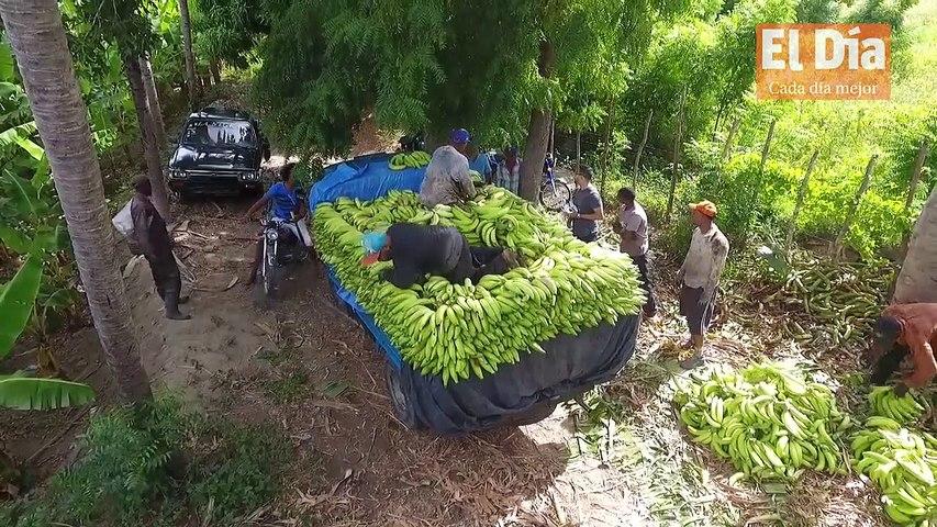 #Boletín l El arroz, aceite y plátanos, entre alimentos que más aumentaron en abril. Boletín con Katherine Espino