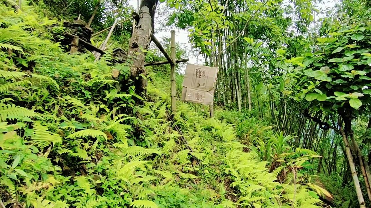Healthy Eating Asmr: Bamboo Shoots