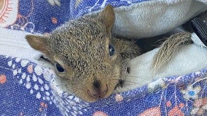 Saving A Very Special Squirrel