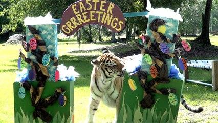 Big Cat Easter Grrrrreetings