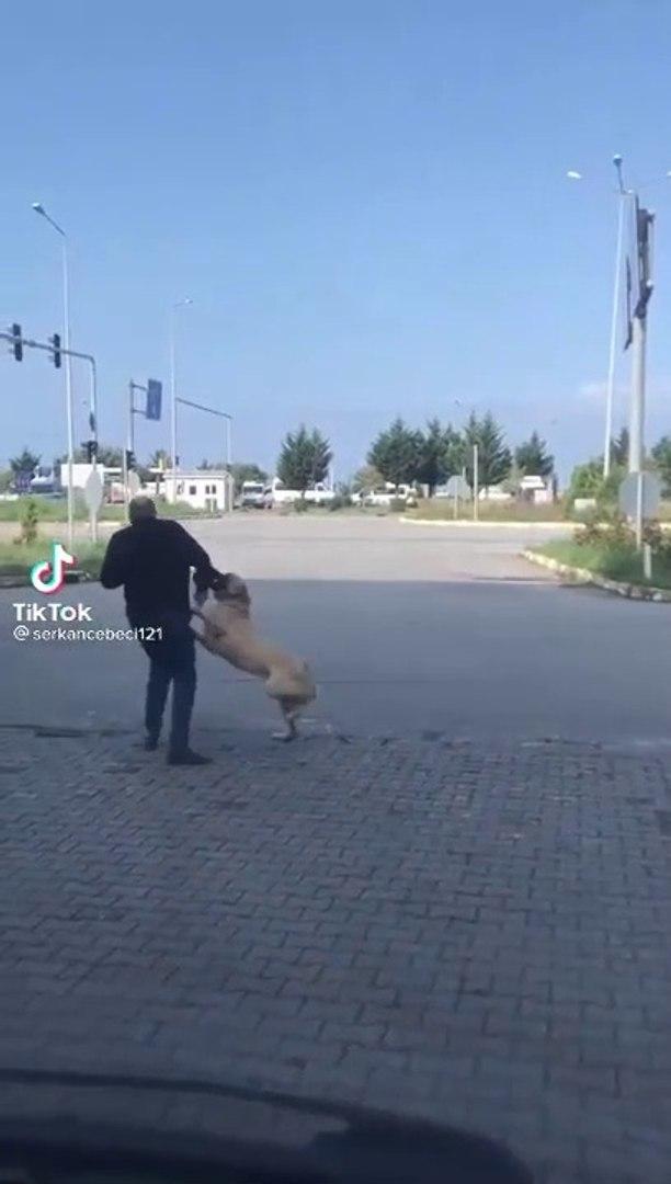 SOKAKTA COBAN KOPEGi VS ADAM - SHEPHERD DOG VS MAN