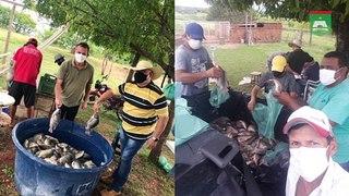 Prefeitura de Santa Helena distribui alimentos de produtores rurais para família cadastradas no CRAS