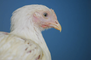 First Human Case of H10N3 Bird Flu Reported in China