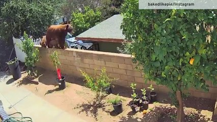 Teen bravely confronts bear to save her dogs