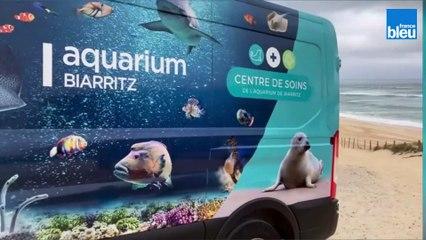 Deux phoques remis en liberté à Vielle-Saint-Girons