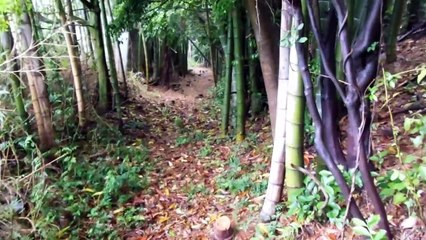 Quiet Walk in the Bamboo Forest in Japan