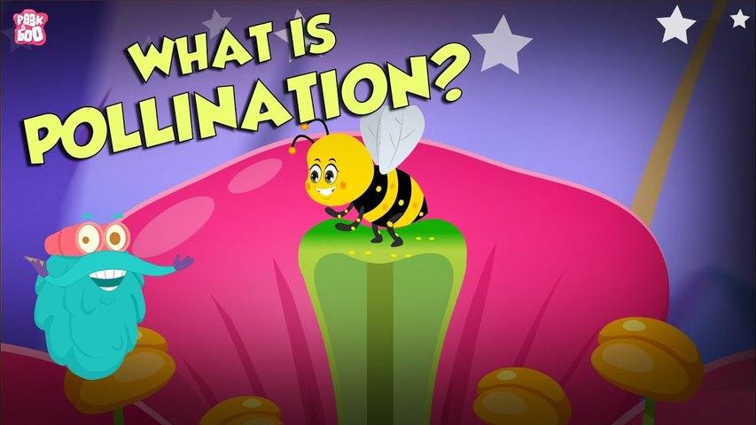 What Is Pollination? | POLLINATION | The Dr Binocs Show | Peekaboo Kidz