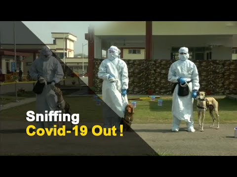 Indian Army Dogs Detect COVID-19 With A Sniff | OTV News