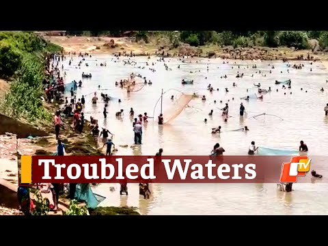 Hundreds In Odisha Gather For Fishing In Village Pond During COVID19 Lockdown | OTV News