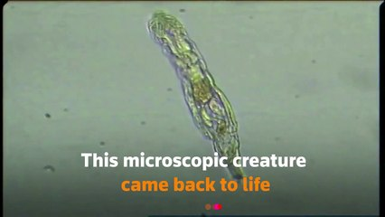 Ancient creature survives 24,000 years in Siberian permafrost