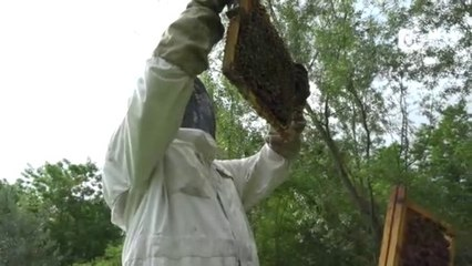 Reportage - Quand les abeilles respirent mieux - Reportage - TéléGrenoble