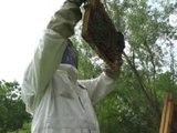 Reportage - Quand les abeilles respirent mieux - SIECLE VERT - TéléGrenoble