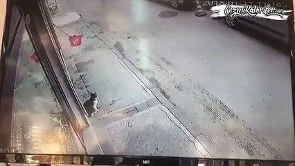 Yoldan geçen adamı önce korkutup düşüren sonra üzülüp yanına giden kedi