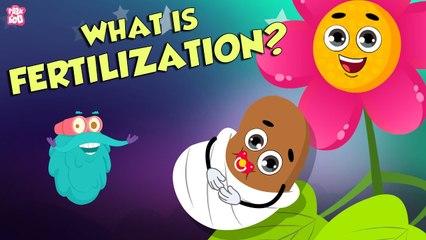 Formation Of Seed   What Is FERTILIZATION?   The Dr Binocs Show   Peekaboo Kidz