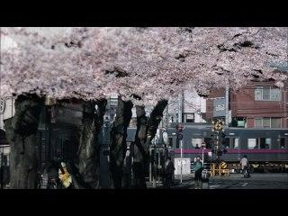 GReeeeN - Sakuracolor