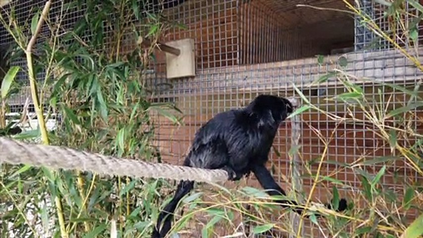 Sorties : les familles du Parc Zoologique s'agrandissent - 16 juin 2021