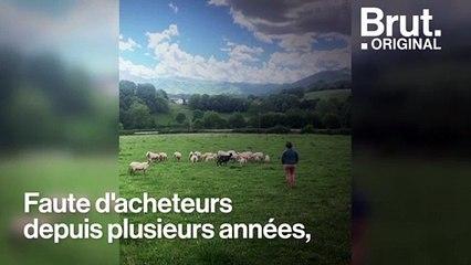 Aña et Aitor relancent la filière laine de brebis au Pays basque