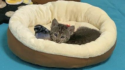 Tragedy Strikes Bobcat Rehab