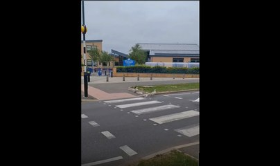 Family of swans use Peterborough level crossing
