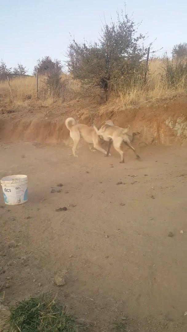 GENCLiK iSTE... - YOUNG SHEPHERD DOG GAME