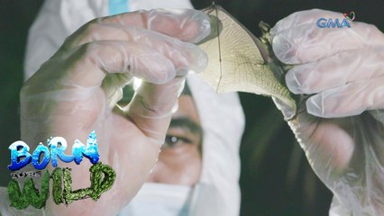 Born to be Wild: Bats and viruses
