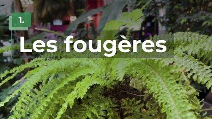 10 plantes à mettre dans sa salle de bain parce qu'elles adorent l'humidité