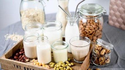 Qual leite vegetal é melhor para o meio ambiente?