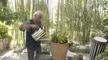 Comment planter des tomates cerises et basilic en pot ?