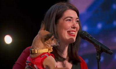 كلب قادر على الغناء يشارك ببرنامج المواهب الأميركية