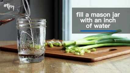 You Can Easily Regrow Green Onions in Nothing But Water!