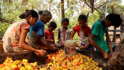 Making liquor out of cashew fruit juice is a 500-year-old tradition in India — meet one family keeping it alive