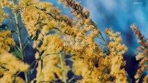 mhometheater - 無料ホームシアター - 無料映画シアター   - おかえりモネ #33