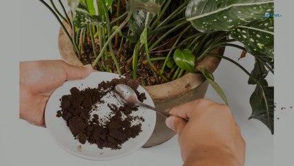 Ménage, jardin, beauté : nos 6 astuces avec du marc de café