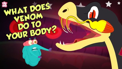 What Does Snake's Venom Do To Your Body?   Snake Venom Effects   Dr Binocs Show   Peekaboo Kidz