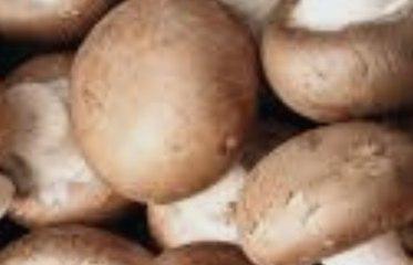 Selon une étude manger des champignons réduirait le risque de cancer de 45%