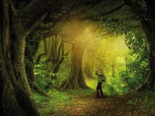 Das geheime Leben der Bäume (The Hidden Life of Trees): Trailer HD VO st FR/NL