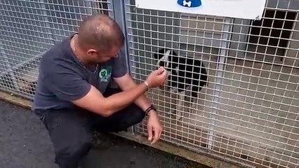 Les SPA sont débordées début juillet : l'animalier Florien et Turbo, un croisé Border visiblement laissé à l'abandon, au refuge de Besançon