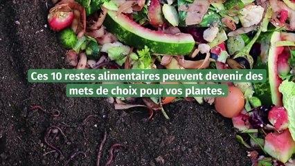 Les restes alimentaires à garder et qui seront bénéfiques pour vos plantes