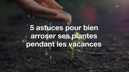 5 astuces pour bien arroser ses plantes pendant les vacances