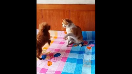 So Cute Pets ! Cute Baby Animals And Funny Pets Video Compilation  Lucky Pets