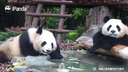 熊猫私汤,泡到心飞扬