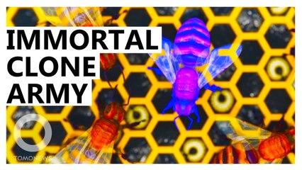 Honeybee Clones Herself, Creates Immortal Clone Army of Millions