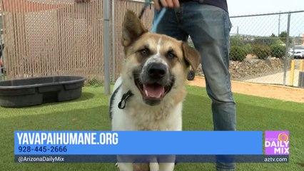 Yavapai Humane Society on Beating the Summer Heat