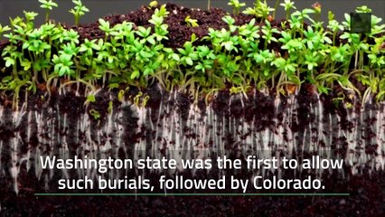 Human Composting is Now Legal in Oregon
